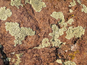 Lichen on the rocks. Might as well enjoy the small stuff.