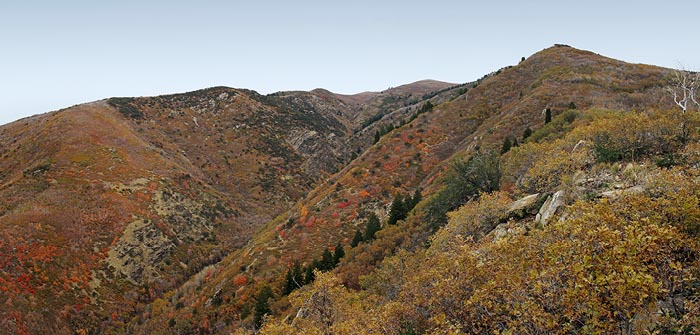 I spent some time in October exploring the steep local mountains. Extreme terrain, very few bucks.