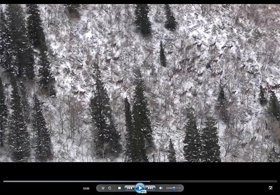 Video still from a herd of more than 100 elk. Nice to see some animals finally, but really just looking for deer.